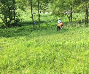 内海湿原①草刈り
