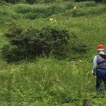 【保全活動】犬挟湿原の草刈りを行いました