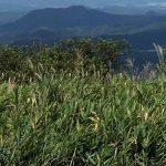 【ガイド活動】三平山登山ガイドをしました