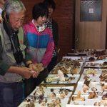 【ツアーレポート】キノコ観察会を開催しました