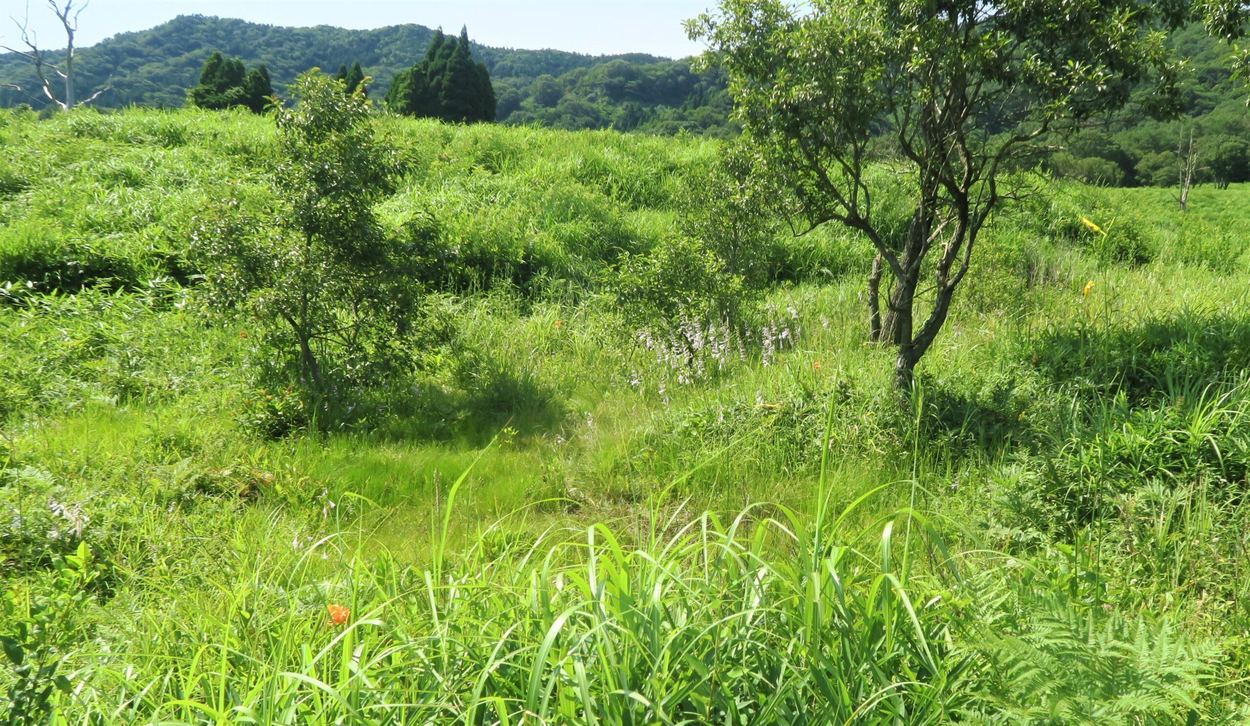 湿地21-2
